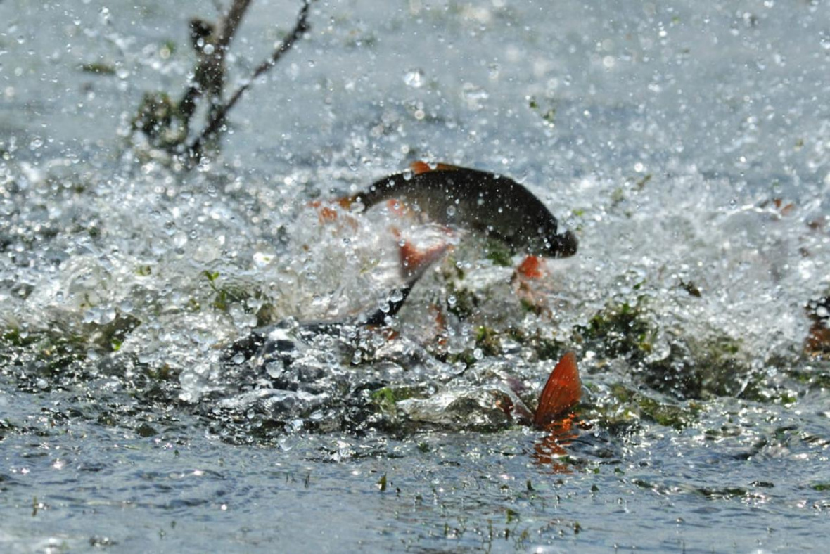 Весенне-летний нерестовый запрет на рыбалку 2019 года